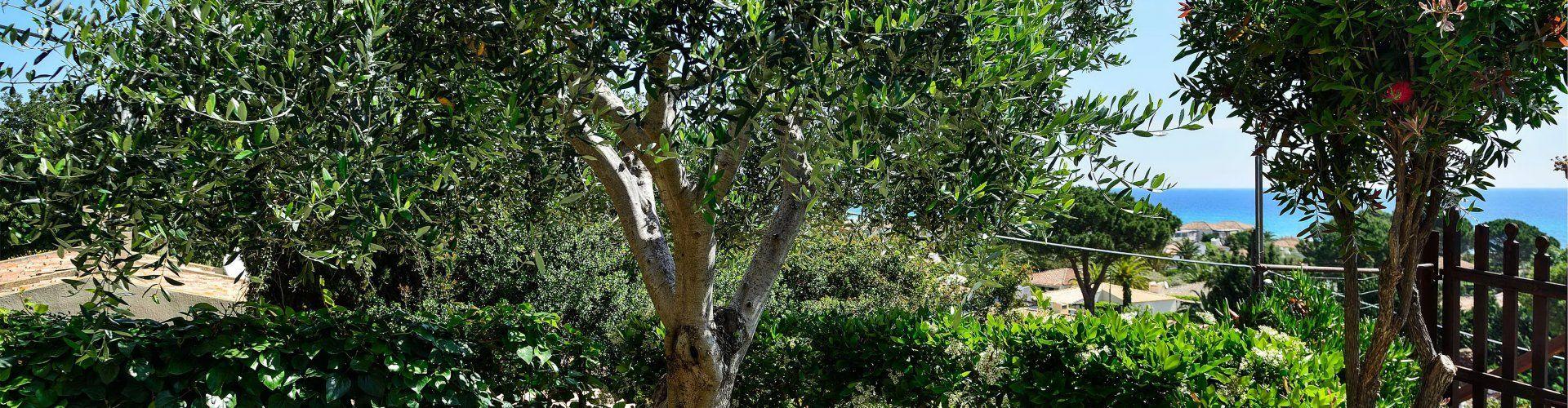 Garten mit mediterranen Pflanzen und Bäumen
