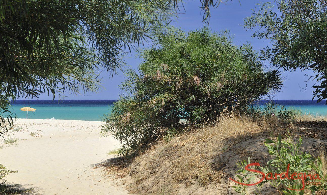 Weg vom Strand zur Villa ToreMari