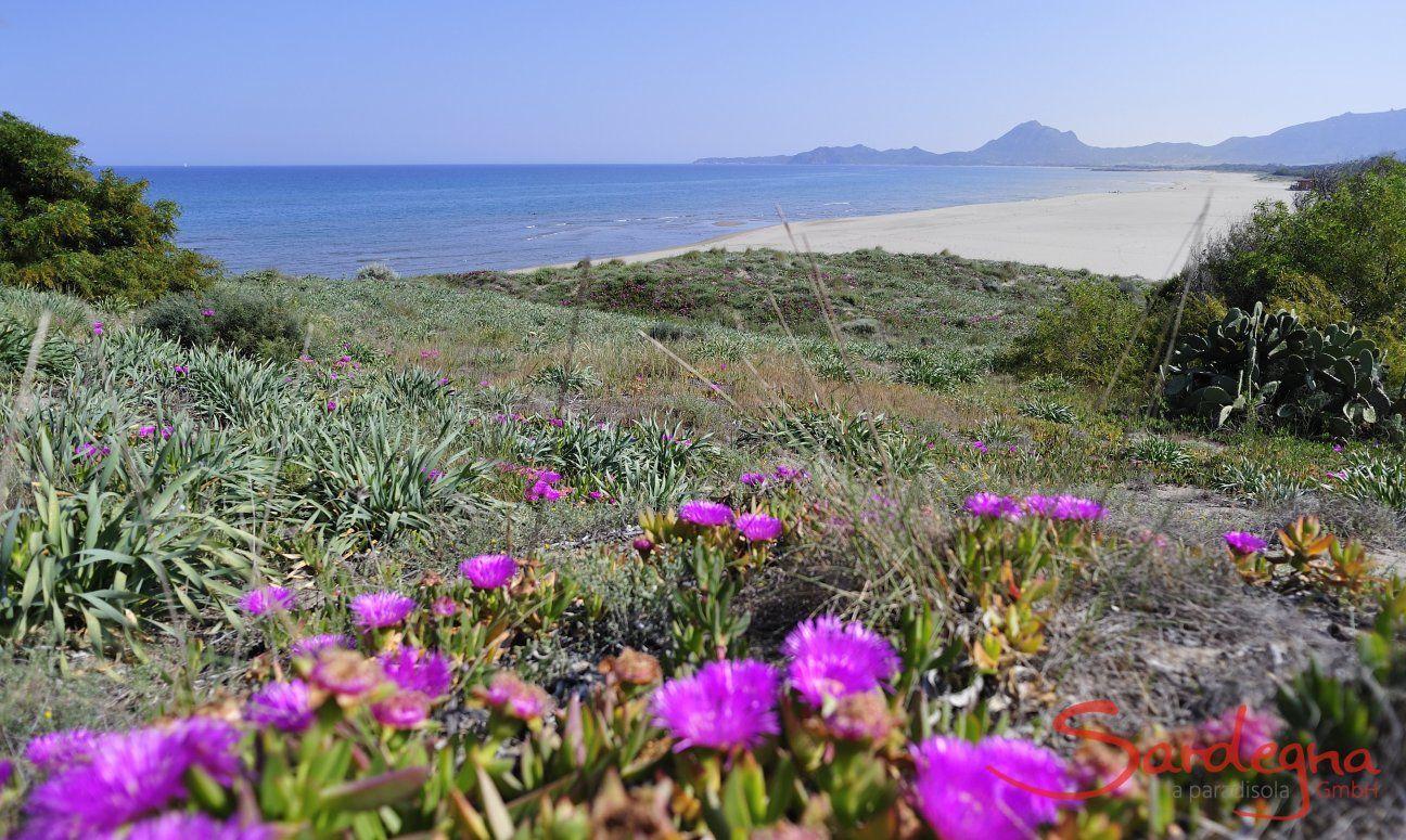 Strand von Torre Salinas, direkt vor der Villa gelegen