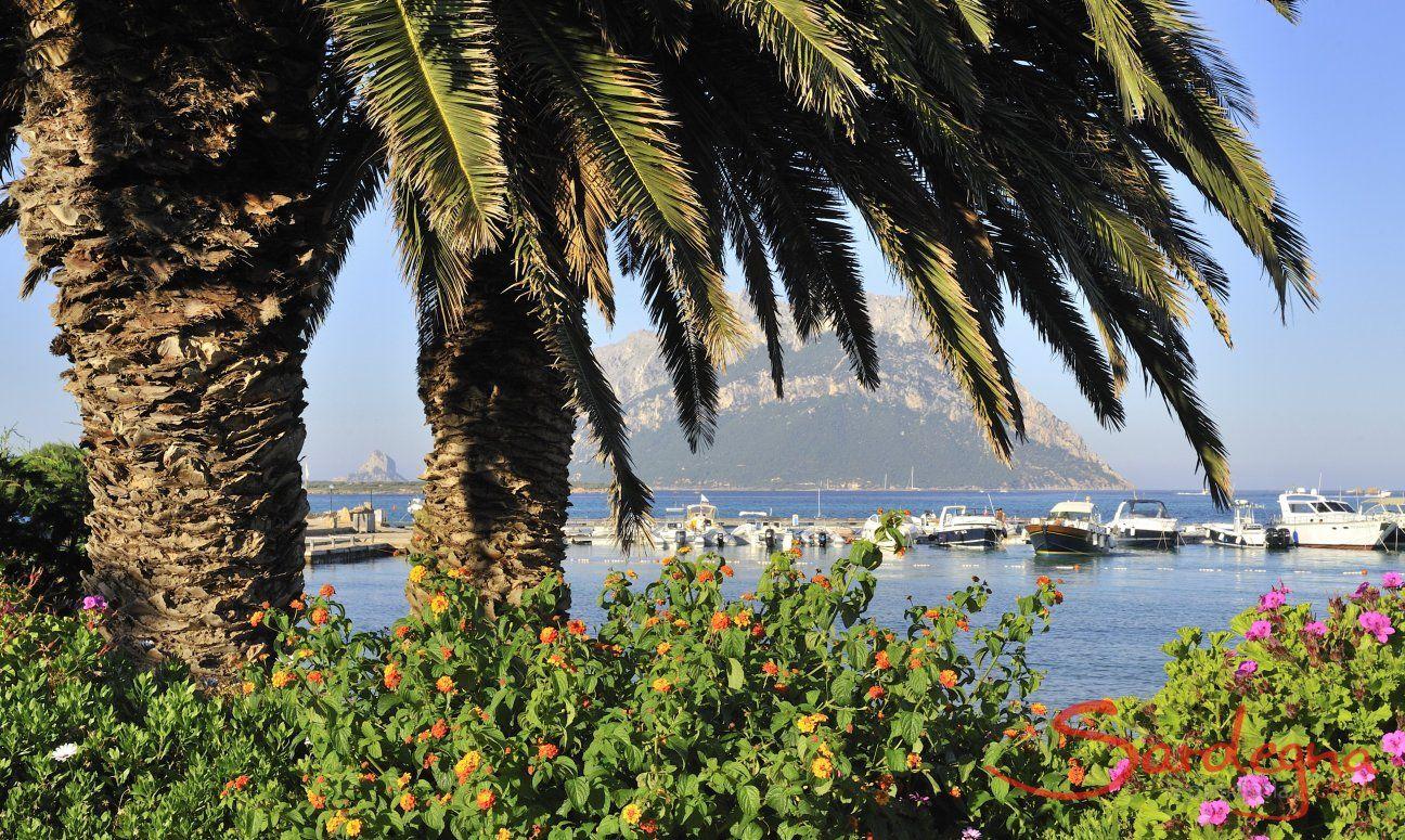 Unter großen Palmen sieht man den Hafen von Porto San Paolo und die Insel Tavolara
