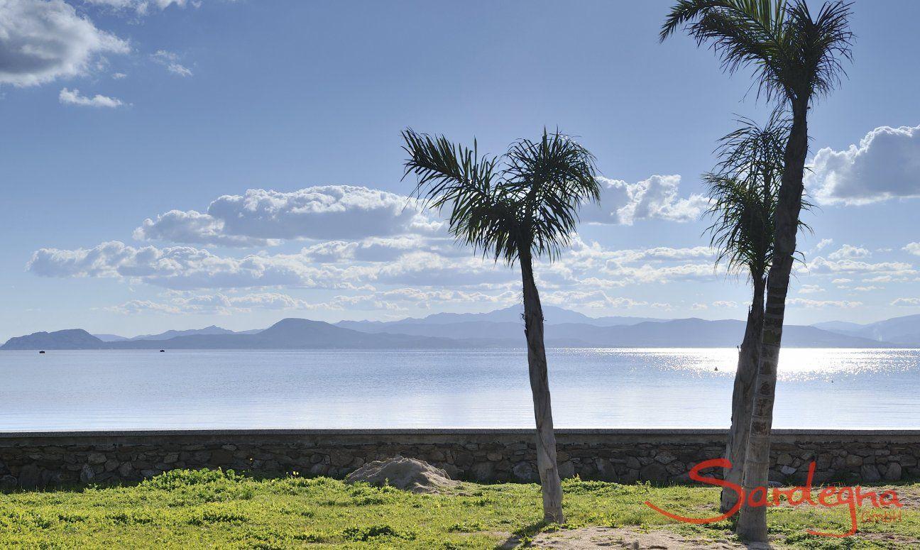 Blick aufs Meer und Palmen an der Strandpromenade