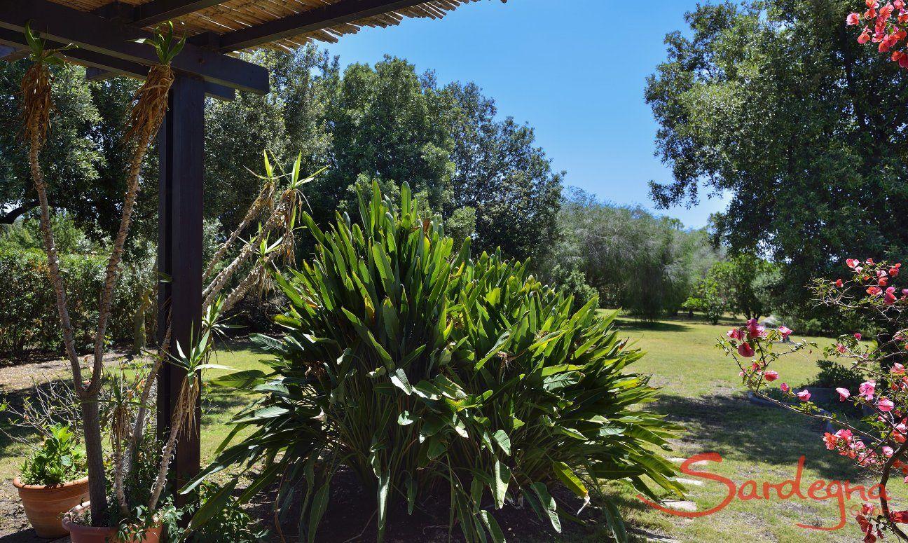Exotische Pflanzen vor der Terrasse