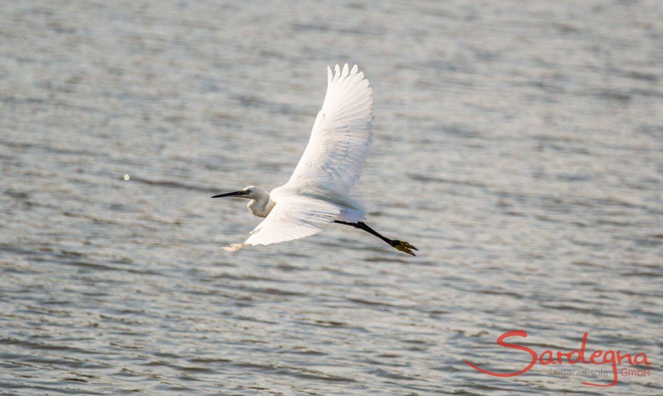 Ein  Reiher fliegt über die Lagune von Porto Taverna