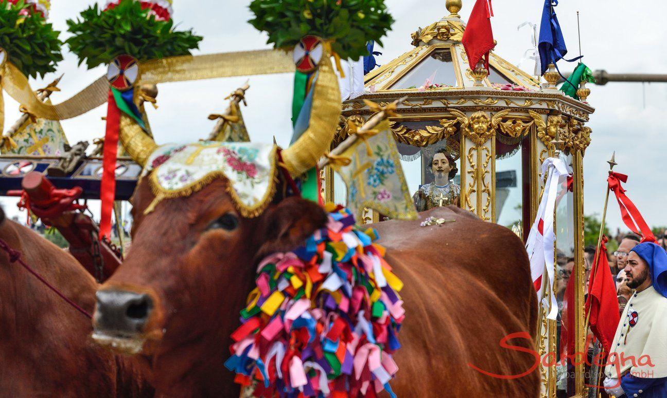 Pula | Geschmückte Ochsen mit der Statue des heiligen Sant Efisio