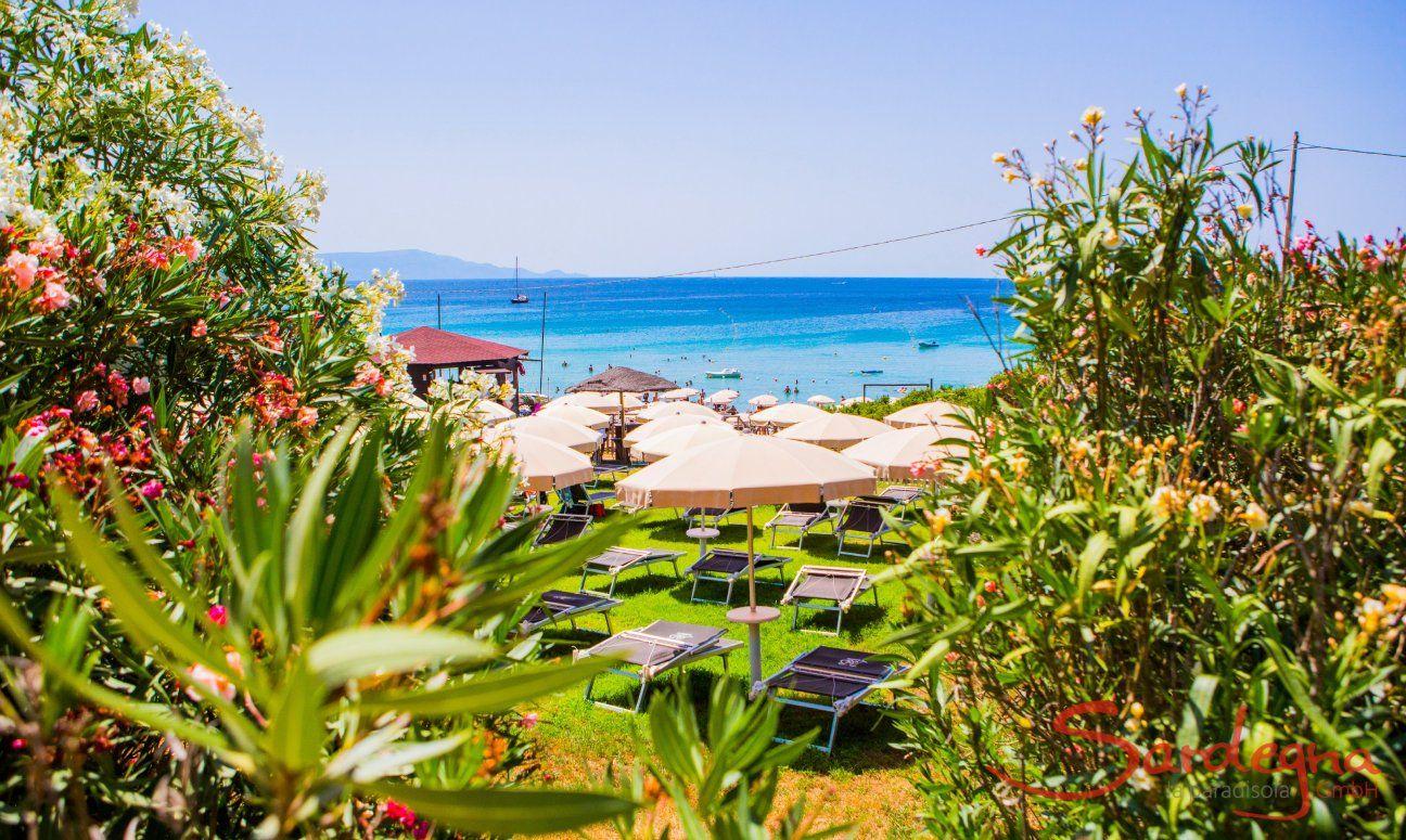 Blick über Oleanderbüsche und Sonnenschirme auf das blaue Meer vorm Strand Le Bombarde Alghero