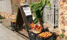 Straßenverkauf von frischem Obst in Pula