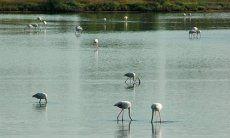 Naturreservat von Colostrai mit Flamingos
