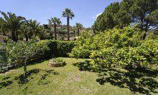 Garten hinter dem Haus mit Zitronenbaum