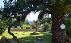 Großer Palmengarten vor dem Haus