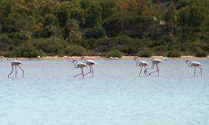 Flamingos auf dem Weg zum Haus