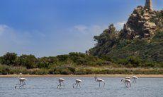 Flamingos auf dem Weg zu Villa Beatrice