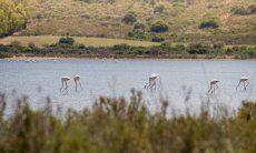 Feuchtgebiet von Muravera mit Flamingos