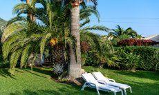 Garten mit Sonnenliegen unter Palmen