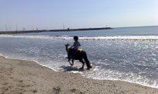 Ponyausritt am Strand von Porto Columbu | Reitstall Boscovivo