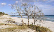 Naturbelassener Strand Cala Ginepro bei Cala Liberotto, Orosei