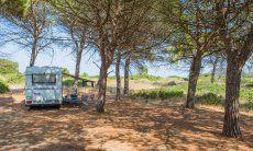 Schattenspendender Pinienhain zum Ausruhen und Parken hinter dem Strand von Feraxi, Capo Ferrato