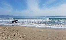 Reiter mit Pferd vor den Wellen am Strand vom Poetto, Cagliari