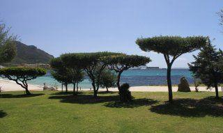 Golfo Aranci Palmen