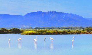 Lagune von Nora mit Flamingos uns Hang von Is Molas im Hintergrund