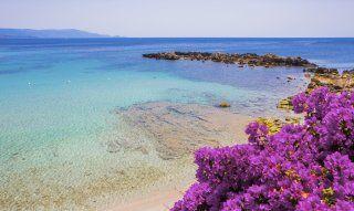 Kristallklares Wasser und violett blühender Bougainville am Strand bei Alghero